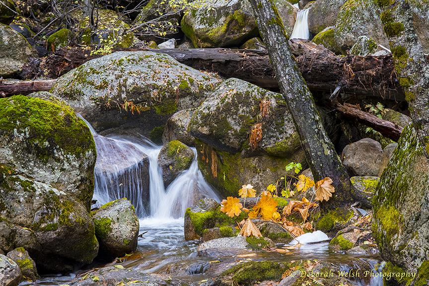 Down stream from Tuolumne falls