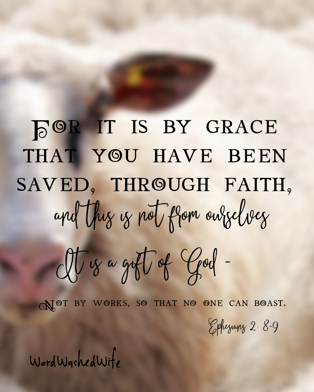 sheep grace.PNG