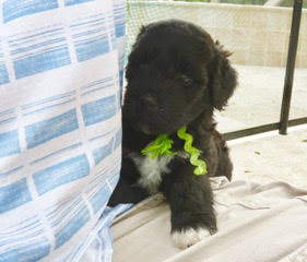 Current and upcoming litters -