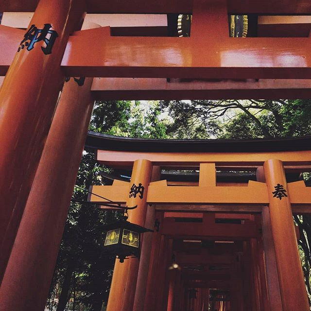 Kyoto's 10,000 transitions to the sacred . . . . . . #colorhunter #orange #orangegates #10k #toriigate #japan #torii #shrine #kyoto #visitjapan #explorejapan #fushimiinari #igjapan #travel #nature #bucketlist #travelgram #architecture #fushimiinarishrine #inari #japantrip #beautifuljapan #wander #travelasia #wanderlust