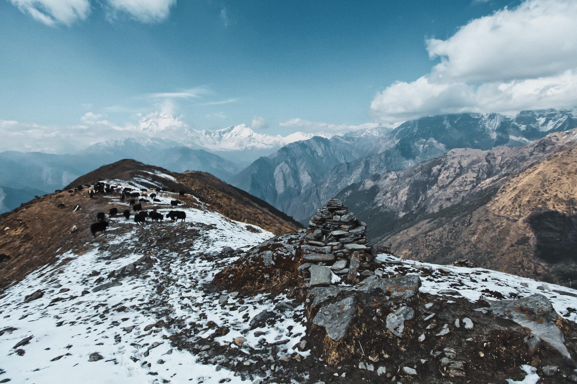 khopra-ridge-yak-herder4.jpg