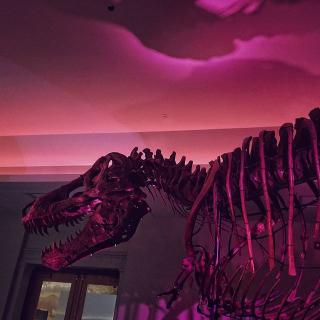 I tell ya, life ain't easy for a boy named Sue ....the most complete trex specimen ever found. #suethetrex #trex #purple #color #fieldmuseumchicago #naturalhistory . . . . . . #chicagofieldmuseum #suetrex #fieldmueum #museum #colorgram #color #colorlover #colorhunter #purplecolor  #cromaticrelationship