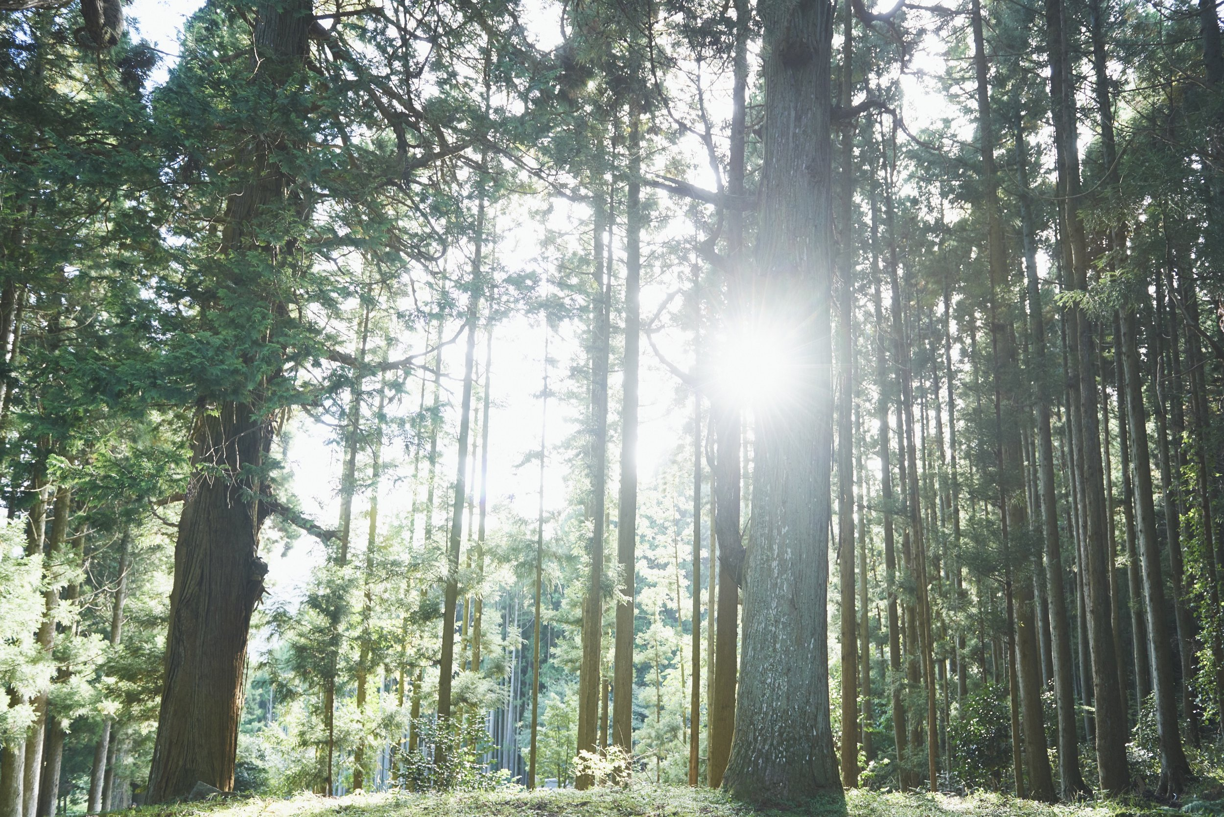 "Destress with the traditional outdoor therapy of '""Forest Bathing"" -"