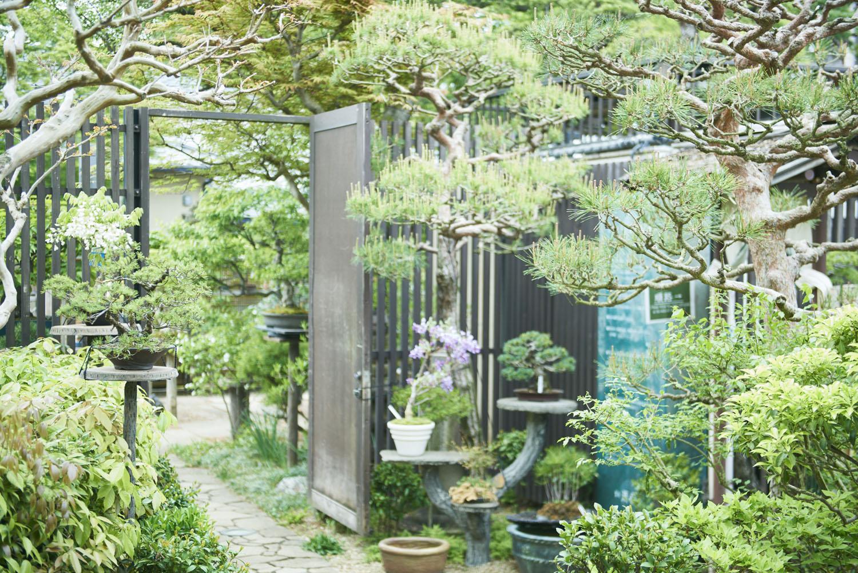 tokyo_bonsai_cherry_blossom_sakura_003.jpg