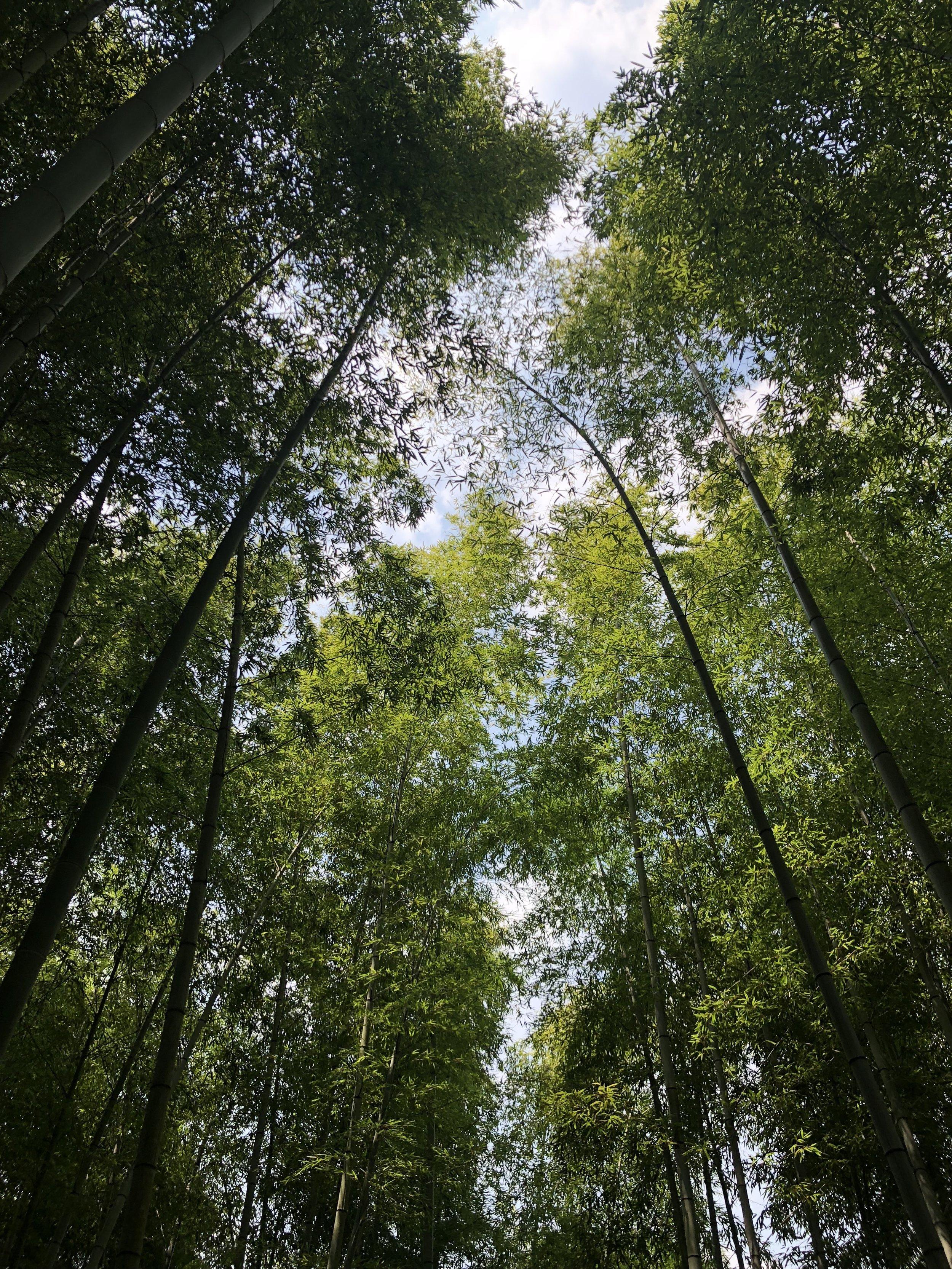 deeperjapan_kyoto_forest_trekking_customer_04.jpg