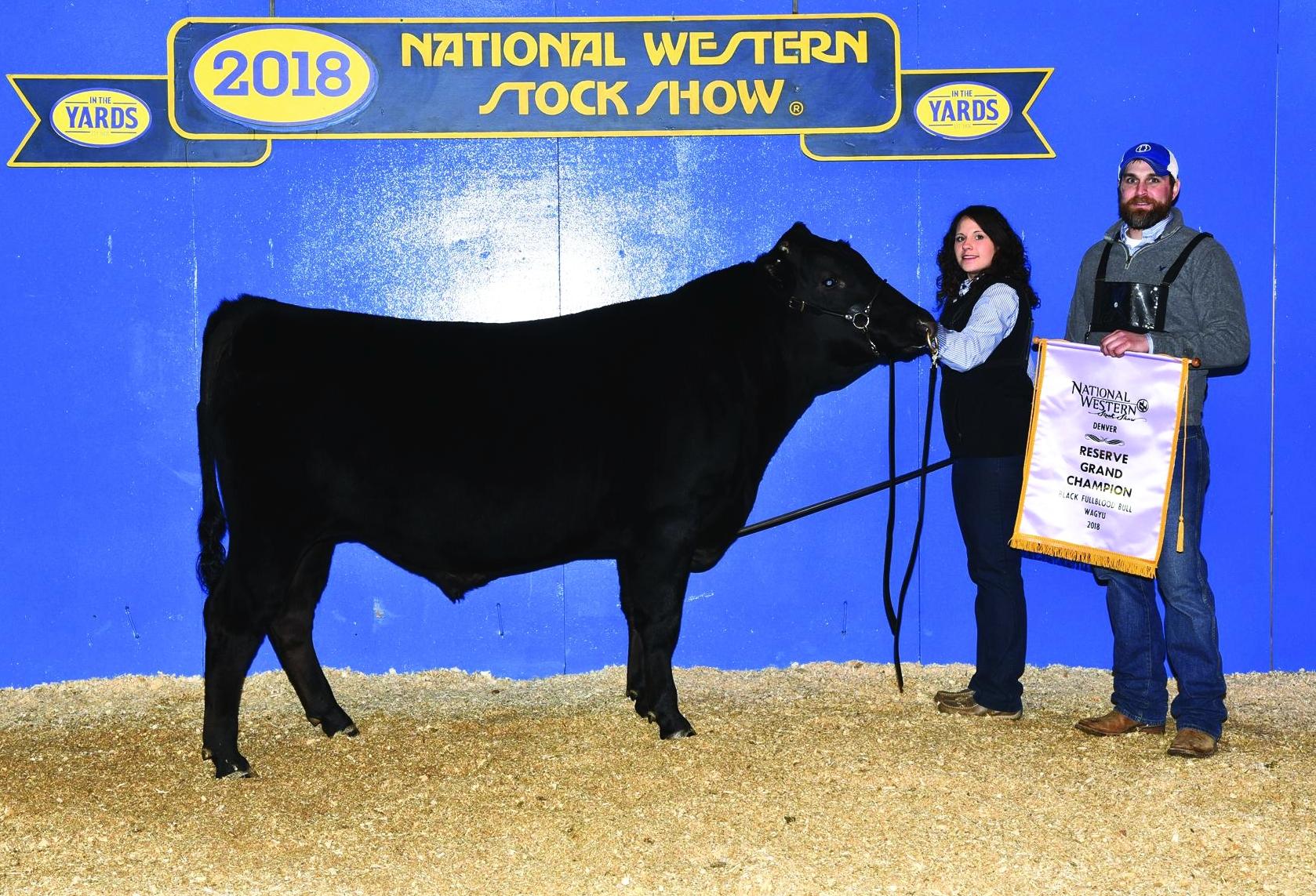 GAF NAUTILUS 50D  2018 NWSS Reserve Champion Fullblood Bull