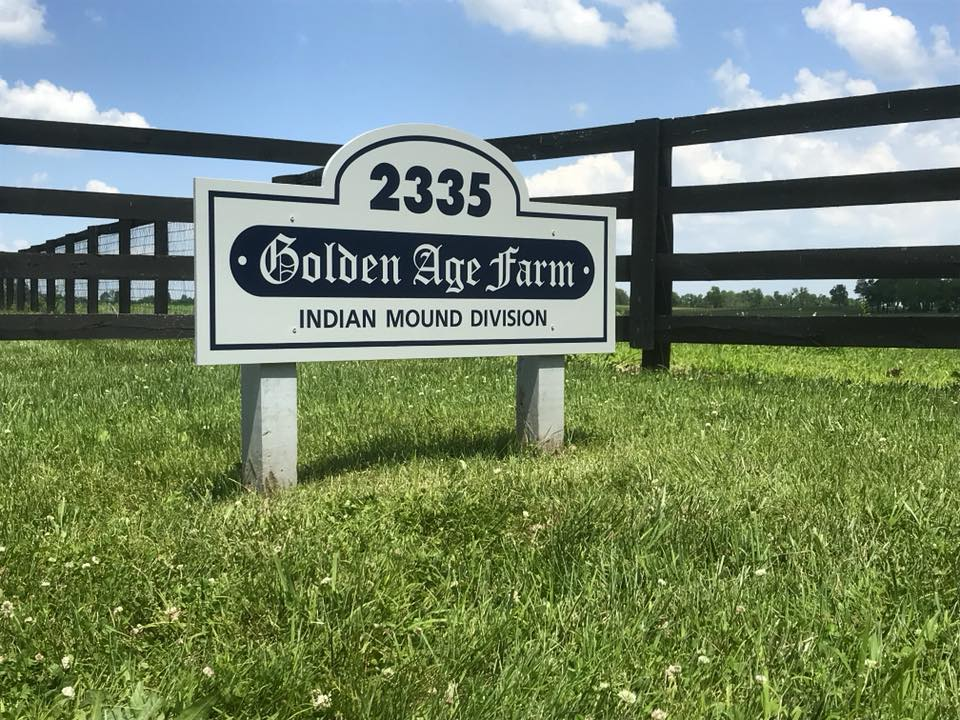 Golden Age Farm Cattle 002