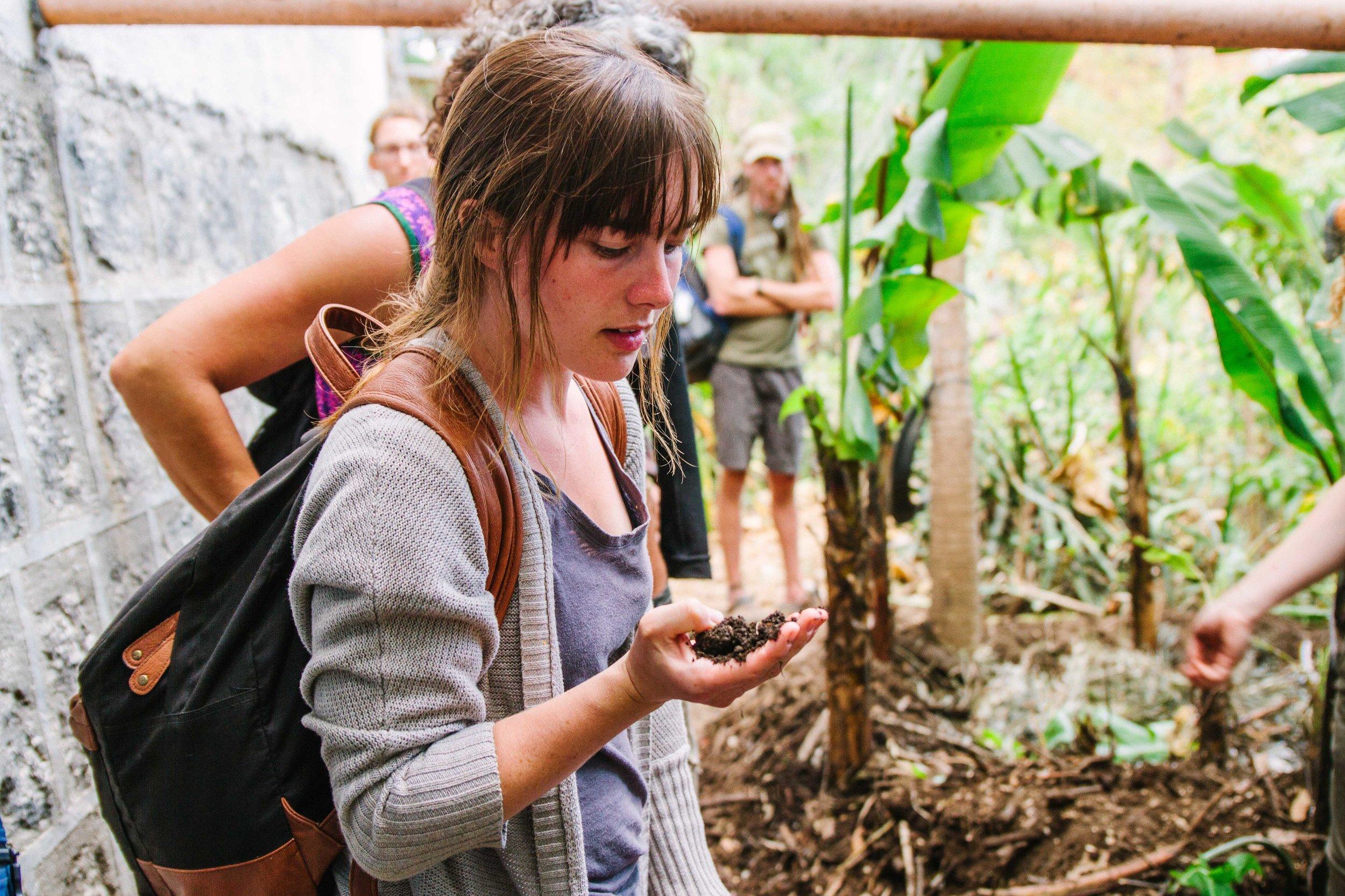 Permaculture, Atitlan Organics, Farm Tour, Permaculture Immersion, Things to do, activities, Bambu Guest House, Tzununa, Lake Atitlan, Guatemala, Central America
