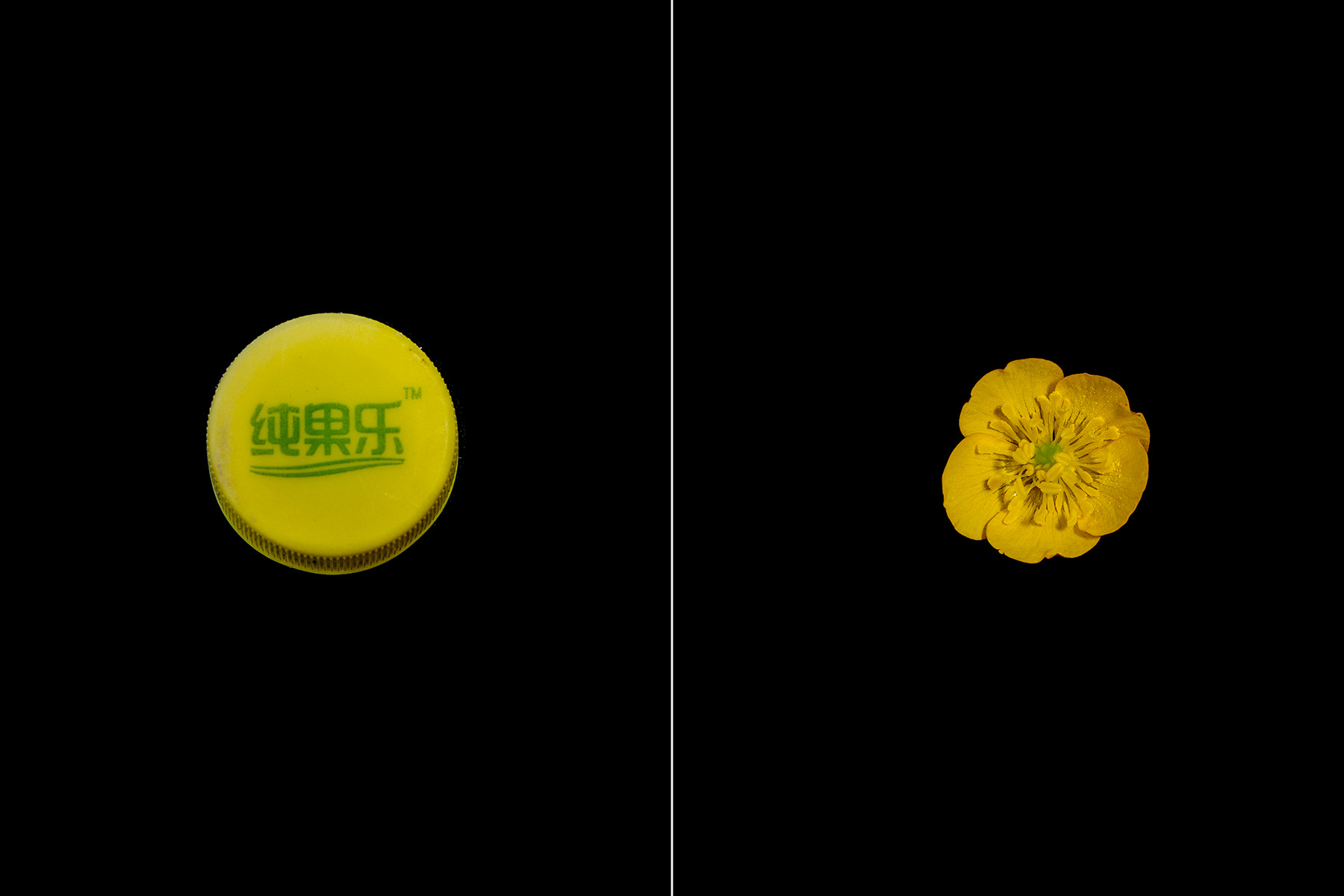 YellowCap_YellowFlower_Prints_6x4_Plastic_NaturalComparrison.jpg
