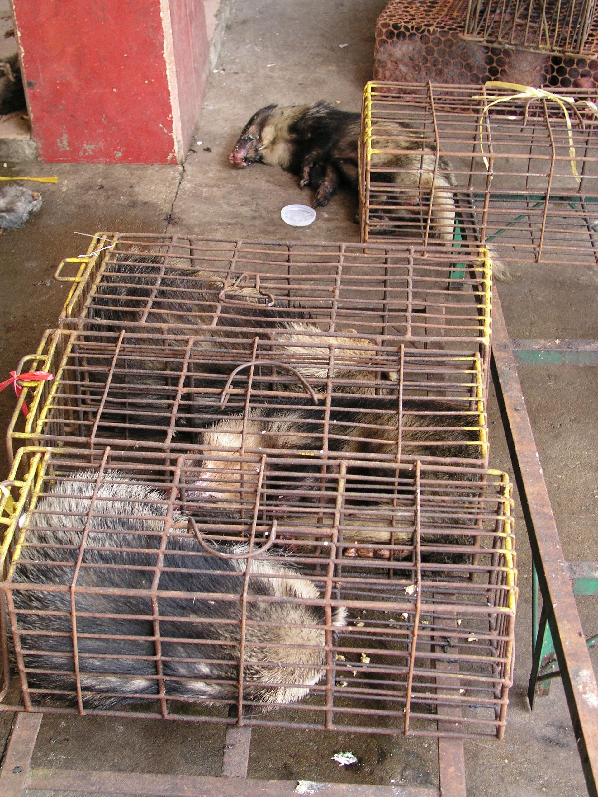 Chau Tau Market in Guangzhou where the SARS epidemic started from live civets .3.JPG
