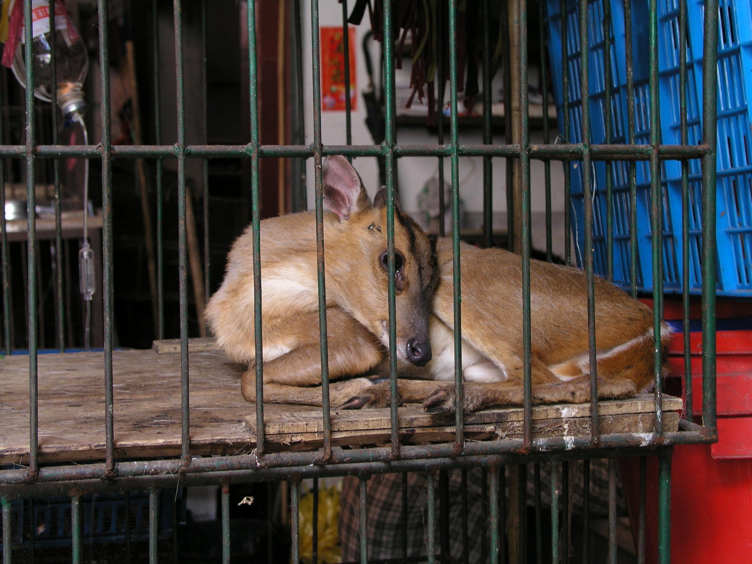 Chau Tau Market in Guangzhou where the SARS epidemic started from live civets .4.JPG
