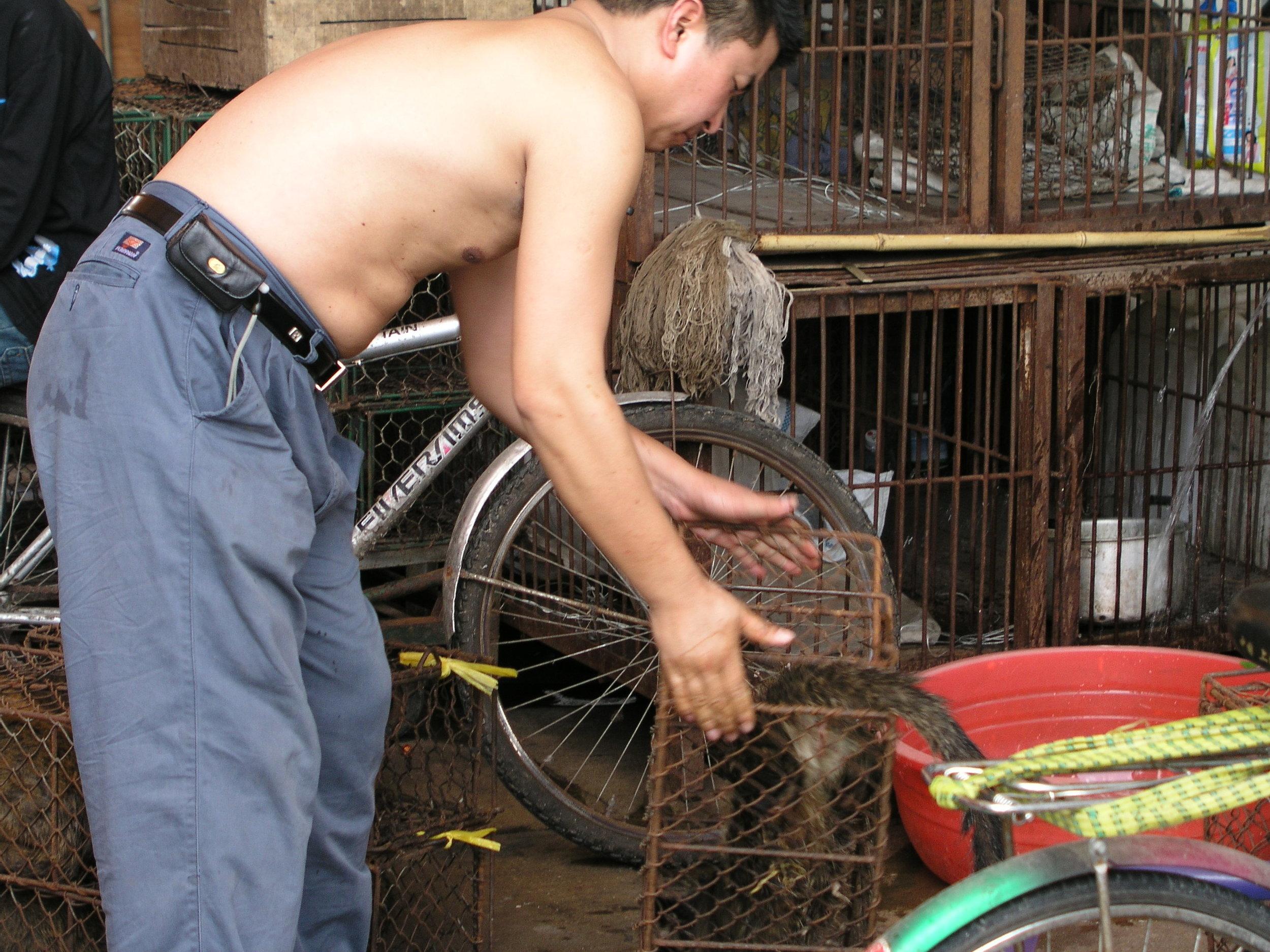 Chau Tau Market in Guangzhou where the SARS epidemic started from live civets .8.JPG