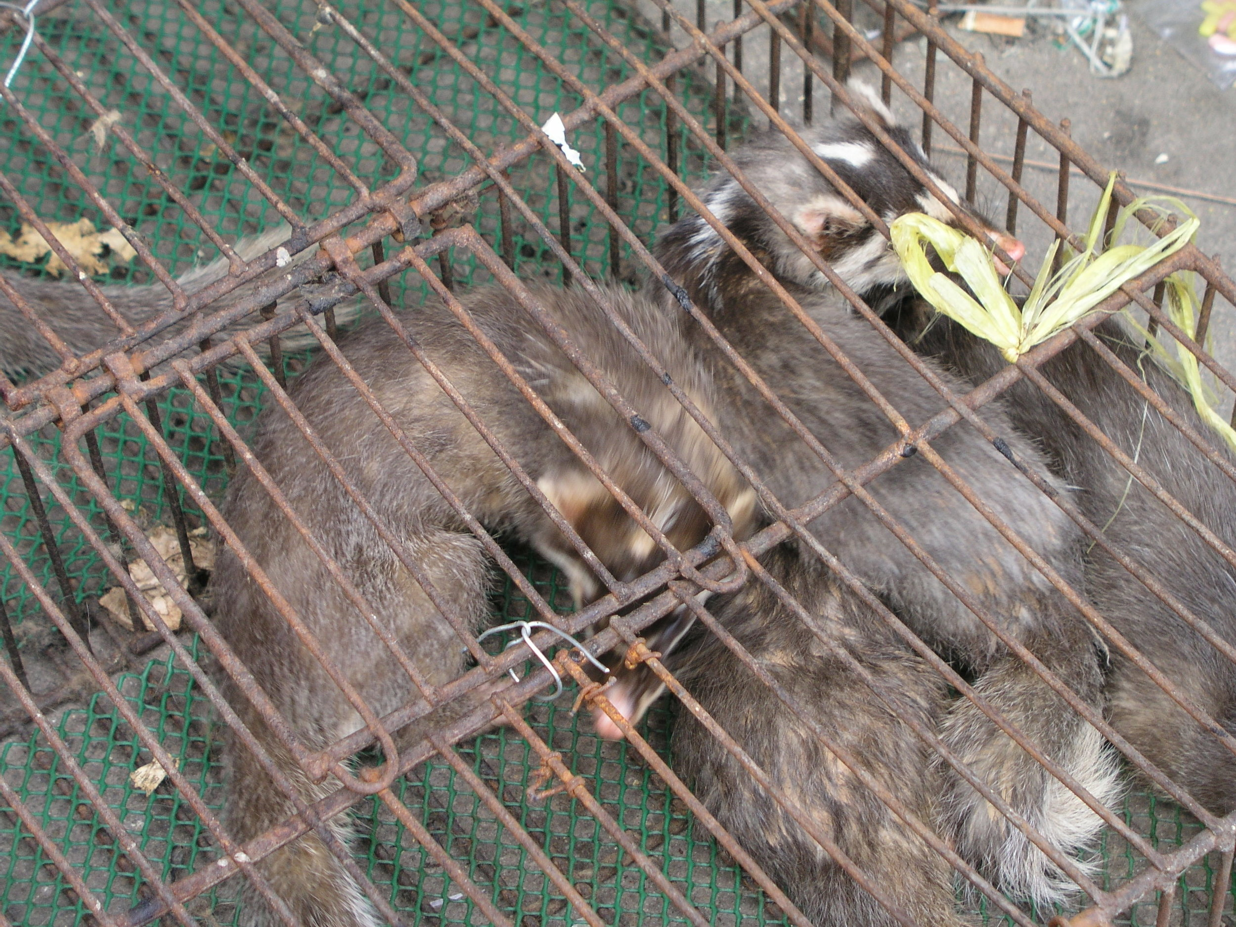 Chau Tau Market in Guangzhou where the SARS epidemic started from live civets .9.JPG
