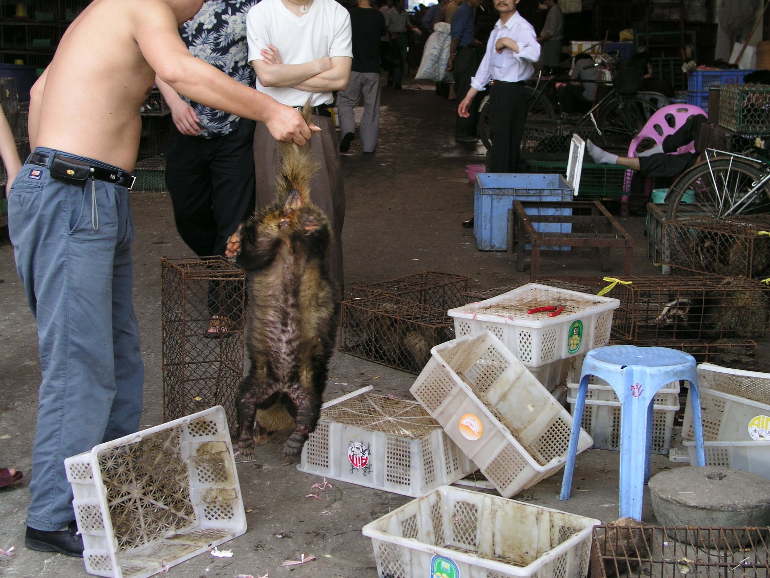 Chau Tau Market in Guangzhou where the SARS epidemic started from live civets .10.JPG