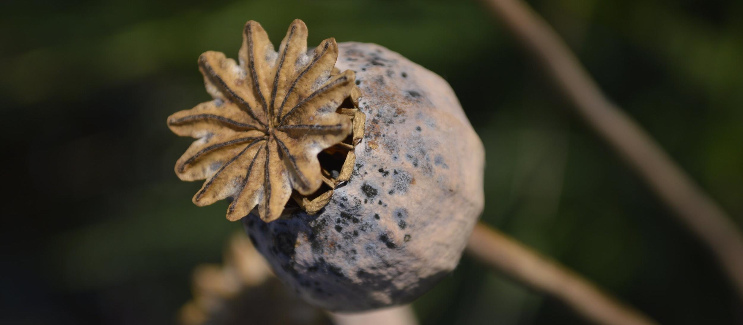 Poppy seeded