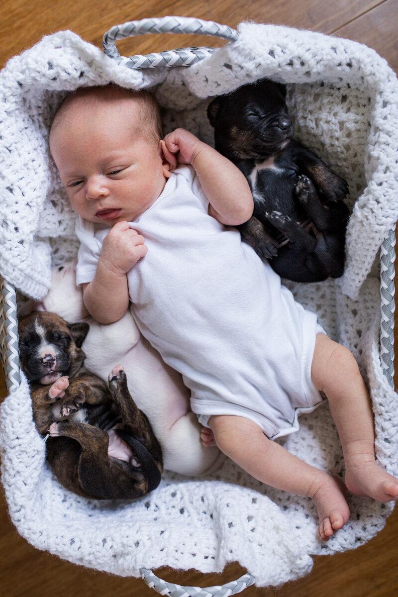 201909_Isaac&Puppies_21.jpg