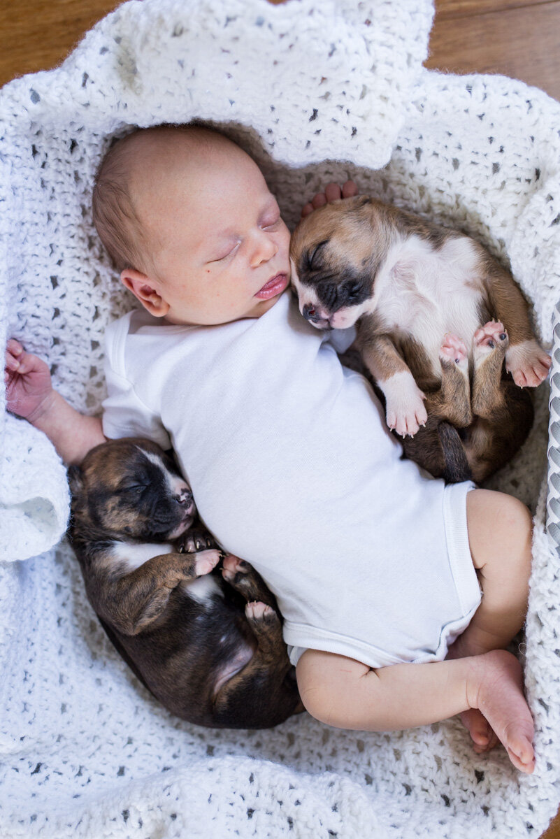201909_Isaac&Puppies_27.jpg
