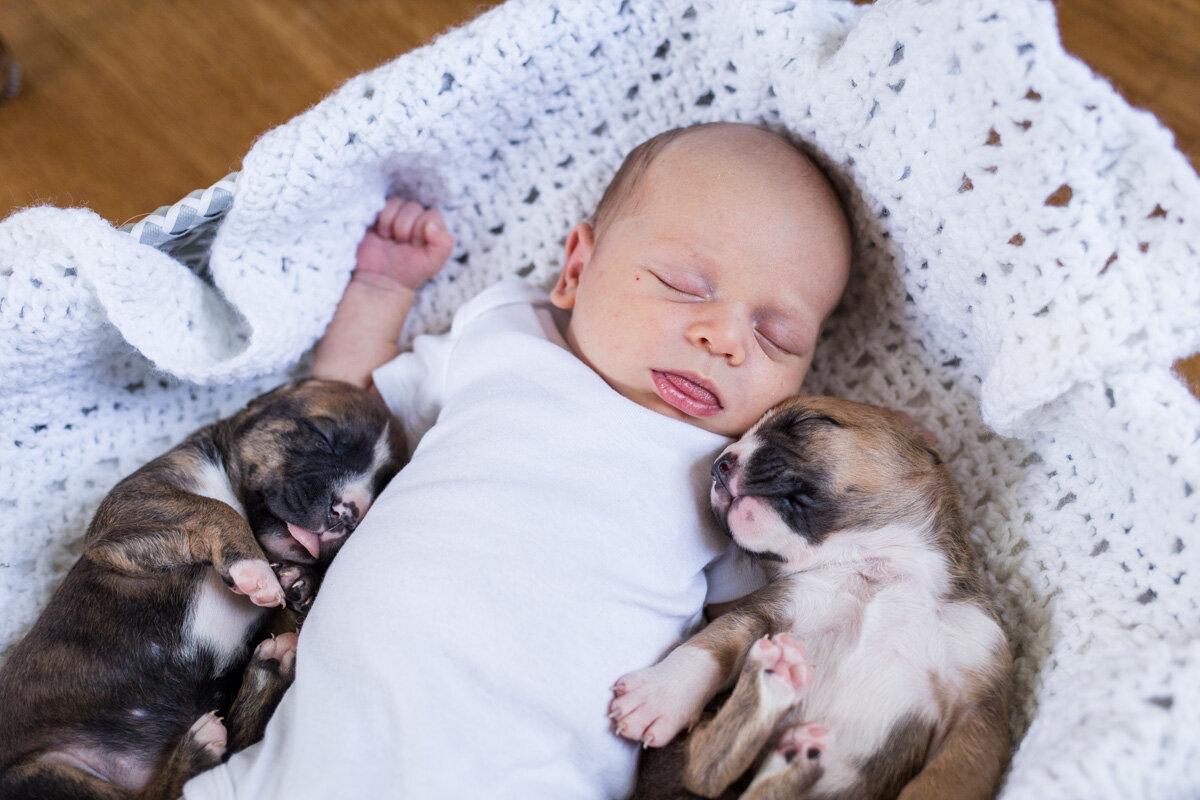 201909_Isaac&Puppies_30.jpg