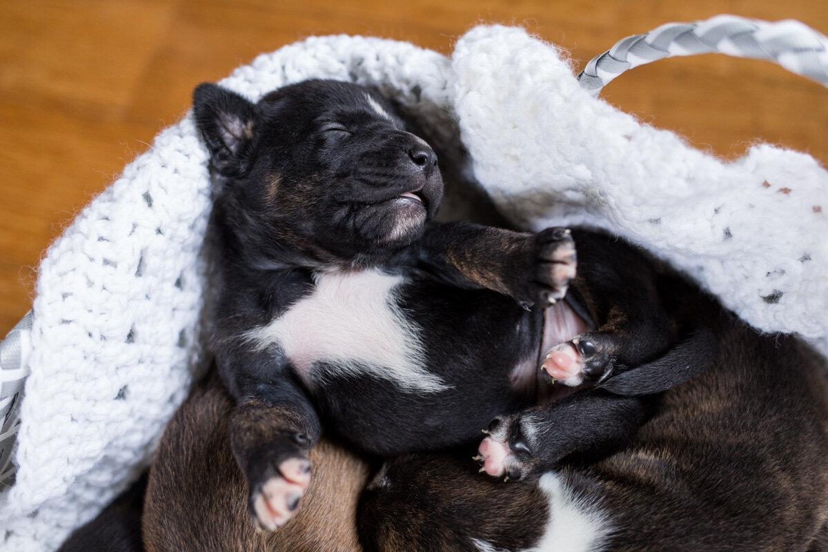 201909_Isaac&Puppies_17.jpg