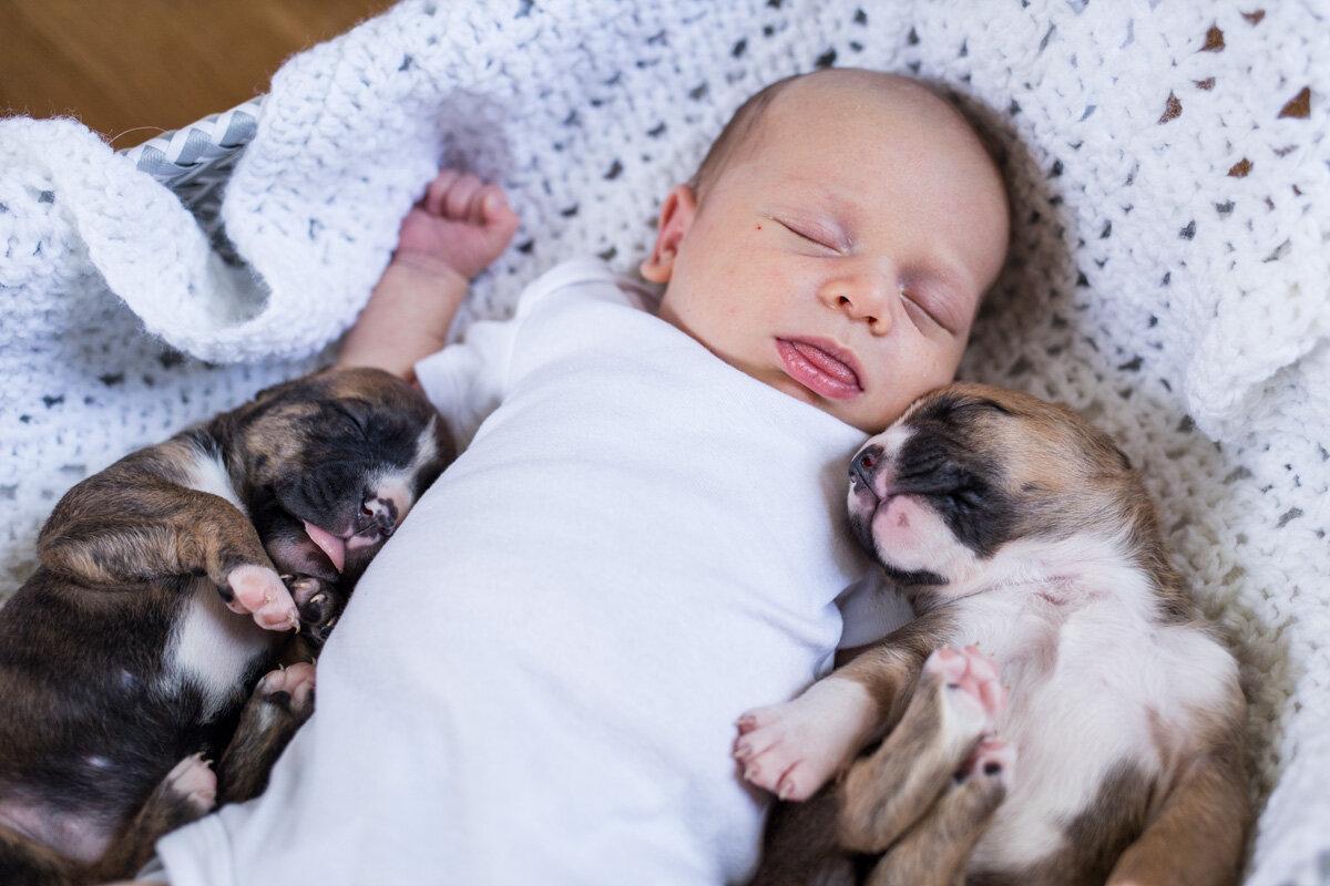 201909_Isaac&Puppies_29.jpg