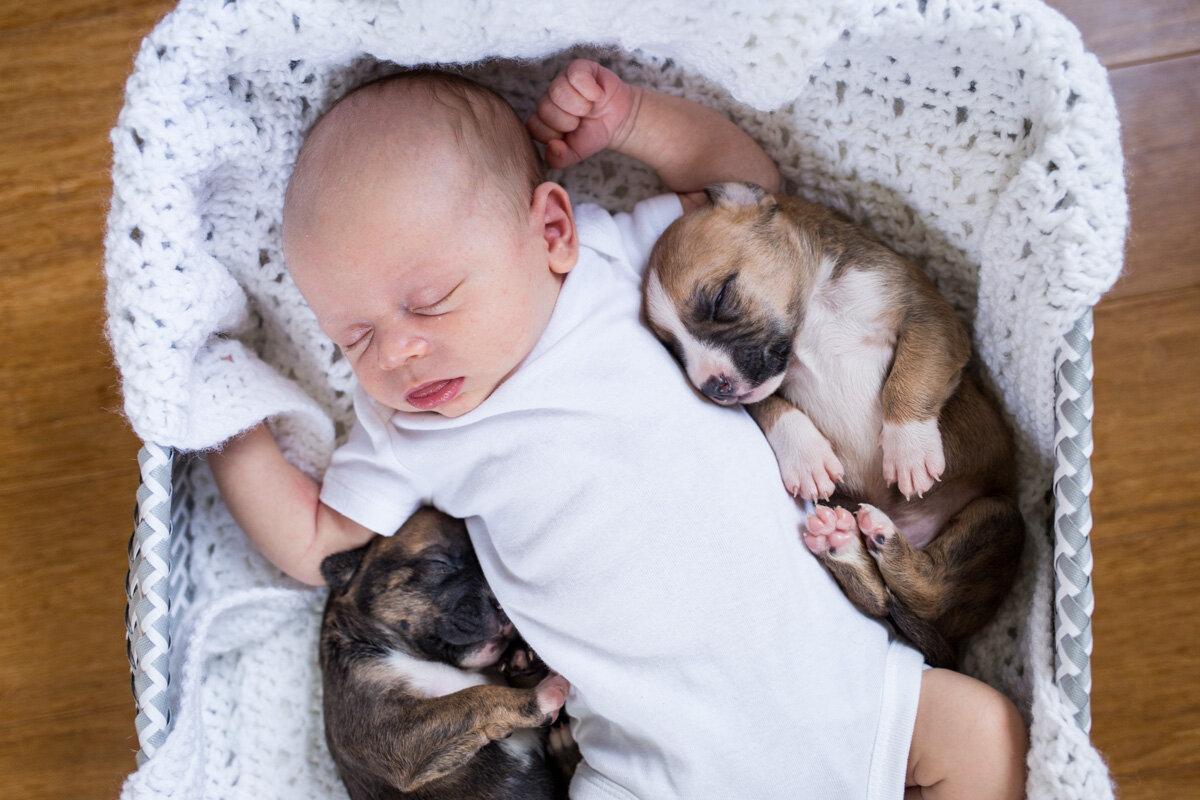 201909_Isaac&Puppies_34.jpg
