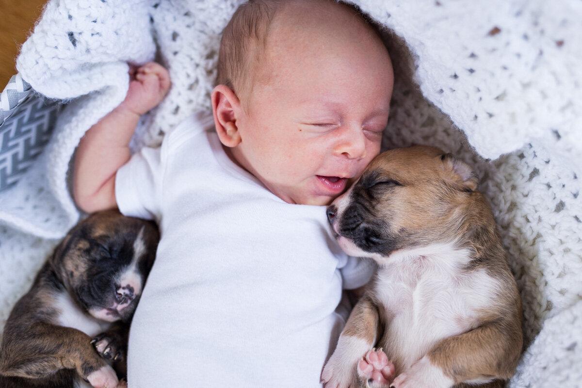 201909_Isaac&Puppies_32.jpg