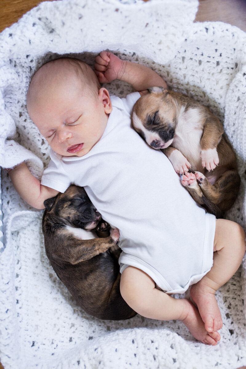 201909_Isaac&Puppies_33.jpg
