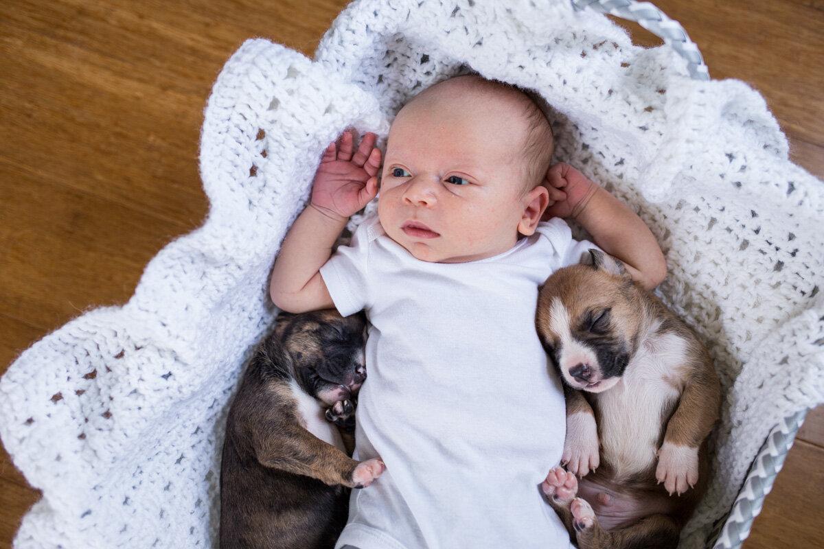 201909_Isaac&Puppies_40.jpg