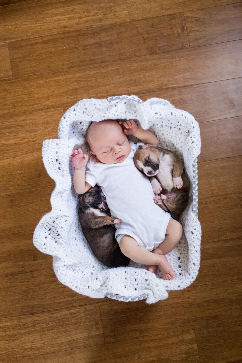 201909_Isaac&Puppies_38.jpg