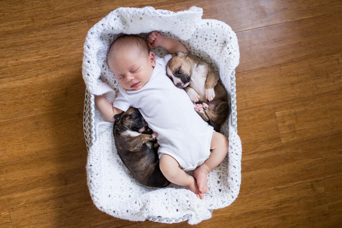 201909_Isaac&Puppies_35.jpg