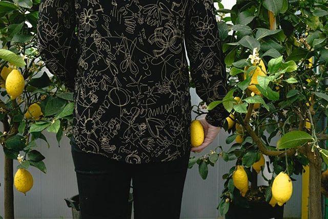 Libertà e perline colorate, ecco quello che io ti darò. E la sensualità delle vite disperate, ecco il dono che ti farò. Donna che stai entrando nella mia vita con una valigia di perplessità, non avere paura che sia già finita, ancora tante cose quest'uomo ti darà… e un gelato al limon. 🍋🍋🍋🍋🍋 Con Paolo Conte per dirti che sul blog di @unacarlotta c'è il nuovo post sulla pianta di limoni. Le foto sono di @davidebuscaglia le piante dei mitici @soulgreen.it  Buona lettura! . . . . #bottegabotanica #ilpollicenerononesiste #urbanjunglebloggers #urbanjungle #limoni #thejungalow #sumemrtime #greenisthenewblack #plantofinstagram #curadellepiante #botanicalpickmeup #plantladyisthenewcatlady #plantlady #greenery #plantsmakepeoplehappy #pileapeperomioides #fridaymood #desert #cactus #friday #flowers #interiorrewilding #fridaymood #UrbanJunglePlant #lemon #plantsarefriends #plantstyling #plantparenthood #apartmentbotanist ⠀