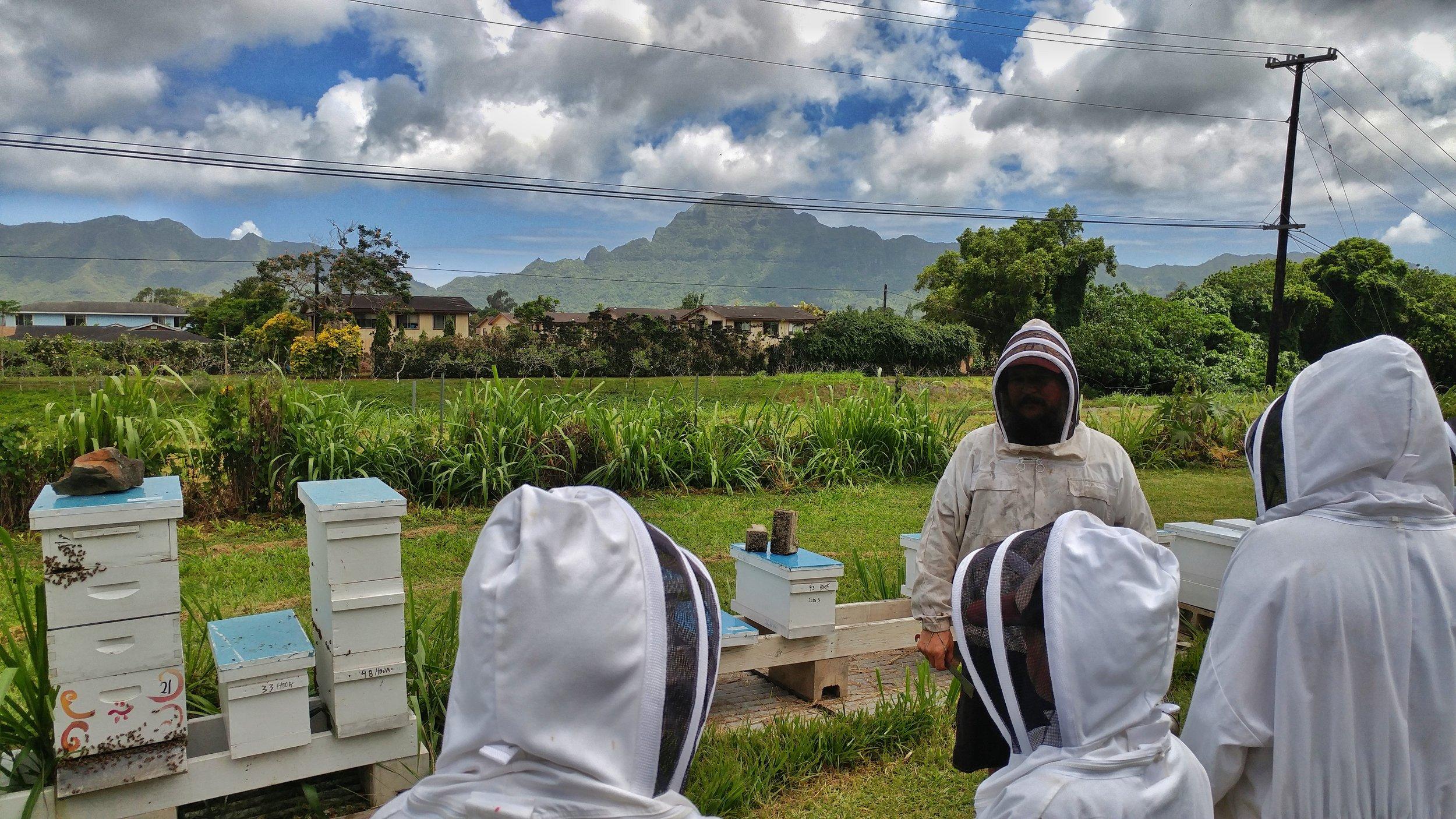 KCC apiary.jpeg