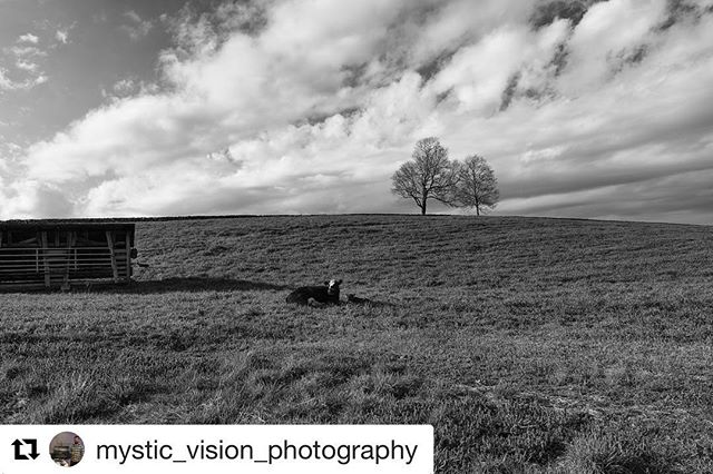 Wow!!! Thanks for such a great shot, @mystic_vision_photography !! 🐮📸