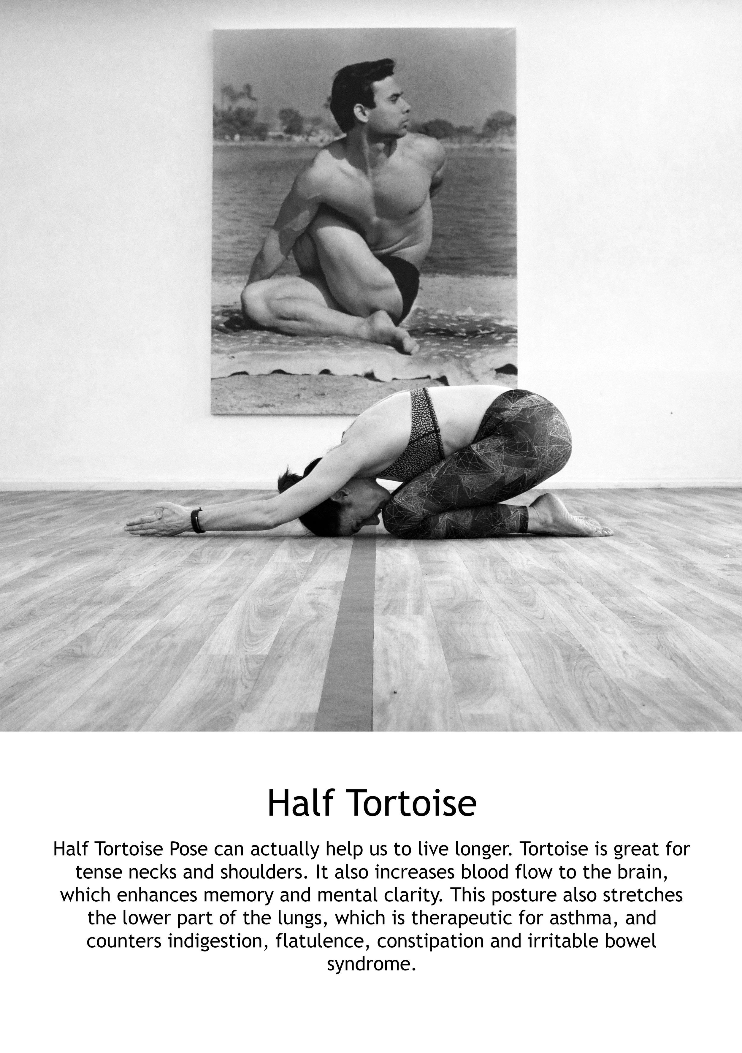 Half Tortoise