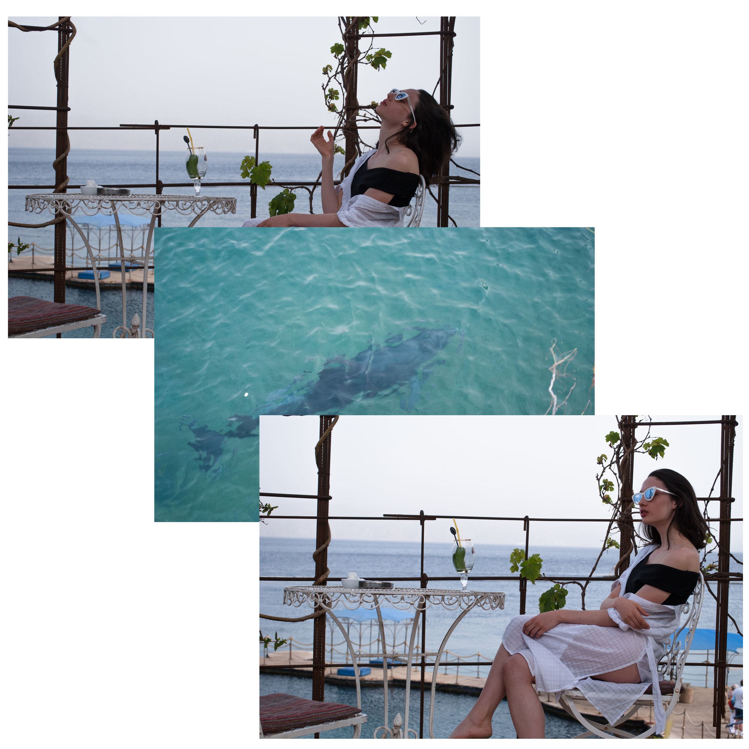 dolphin collage.jpg