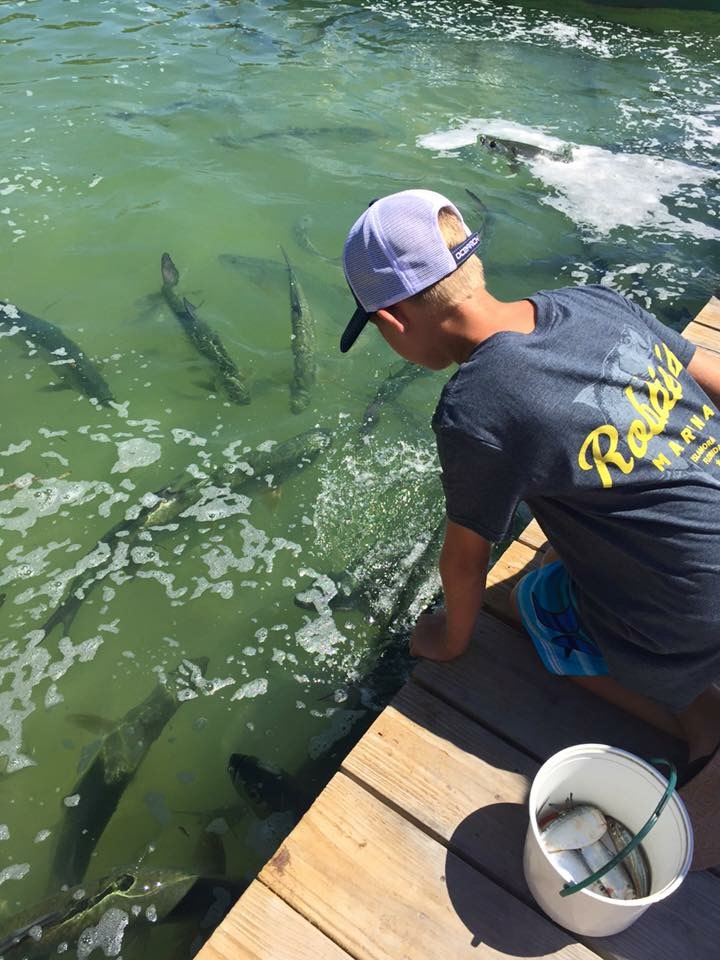 Hand feeding tarpon at Robbie's.