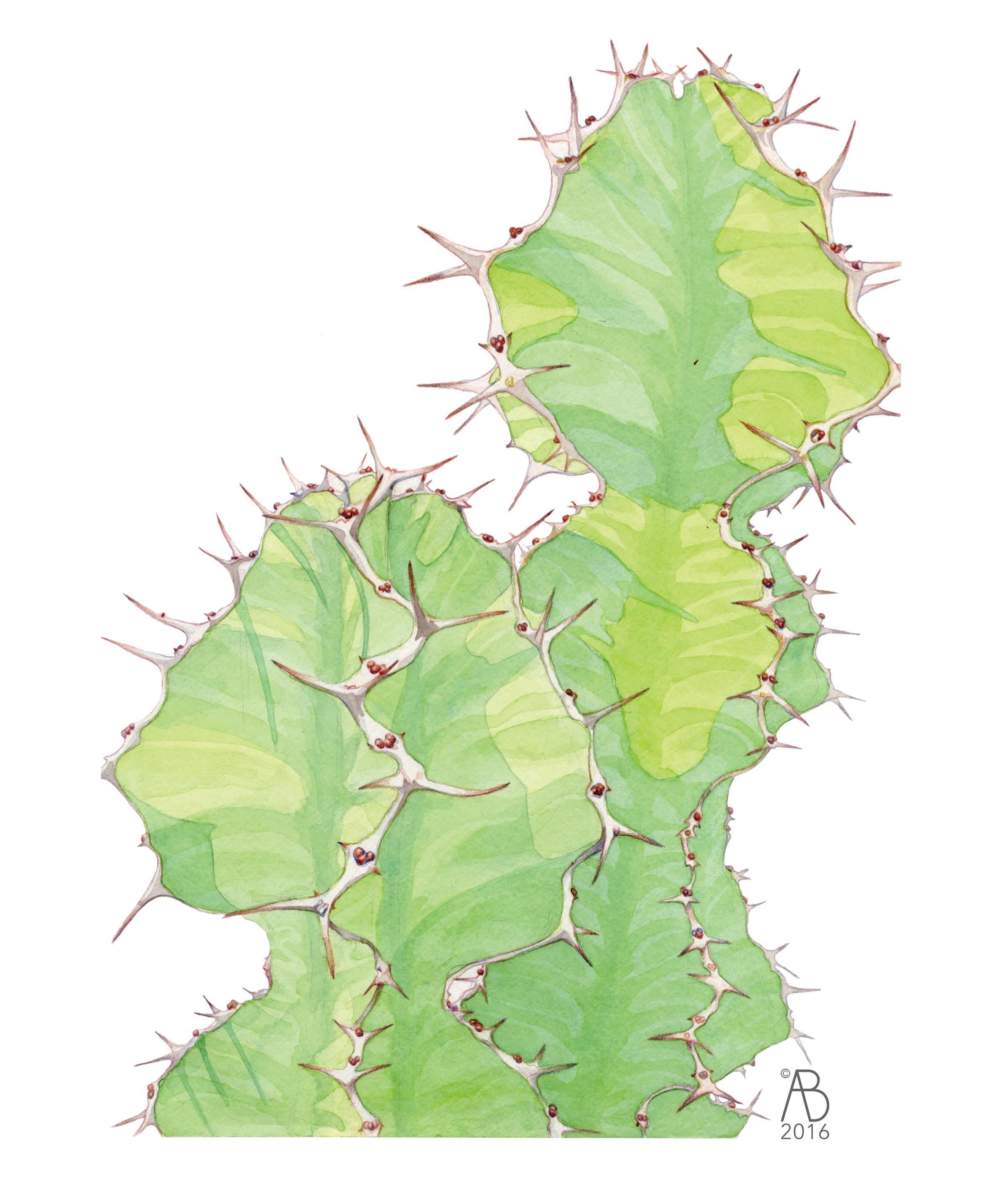 Zig-zag cactus
