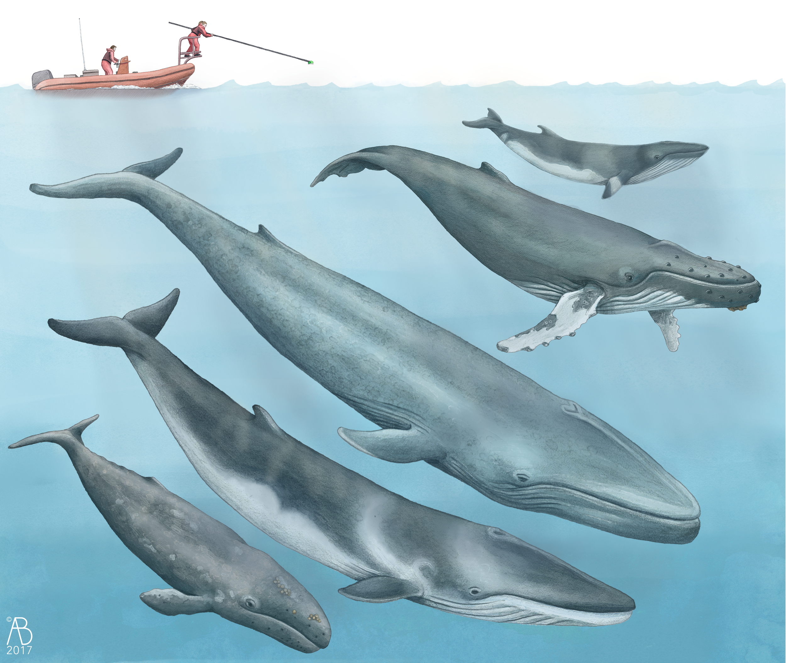 Whales_comp_NoText.png