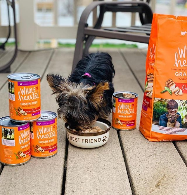 Only the best for our best friends 🧡 Breakfast is served! 📸: @audination_1 #wholeheartedpets