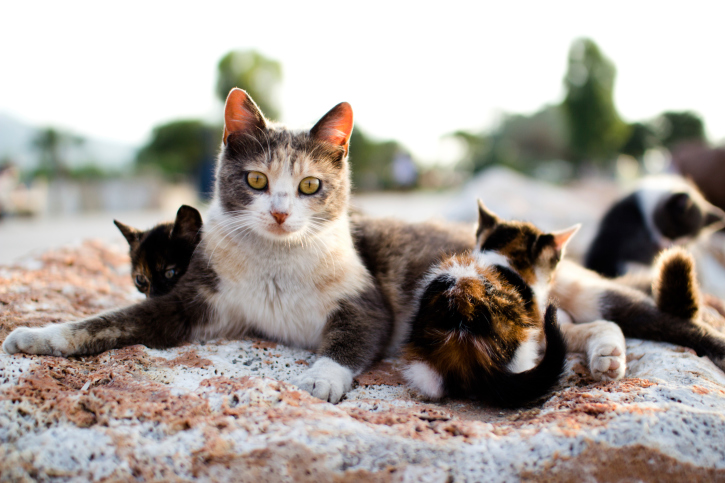 Get help fixing cats BEFORE you see kittens! We all can do our part to SAVE kittens by fixing cats !