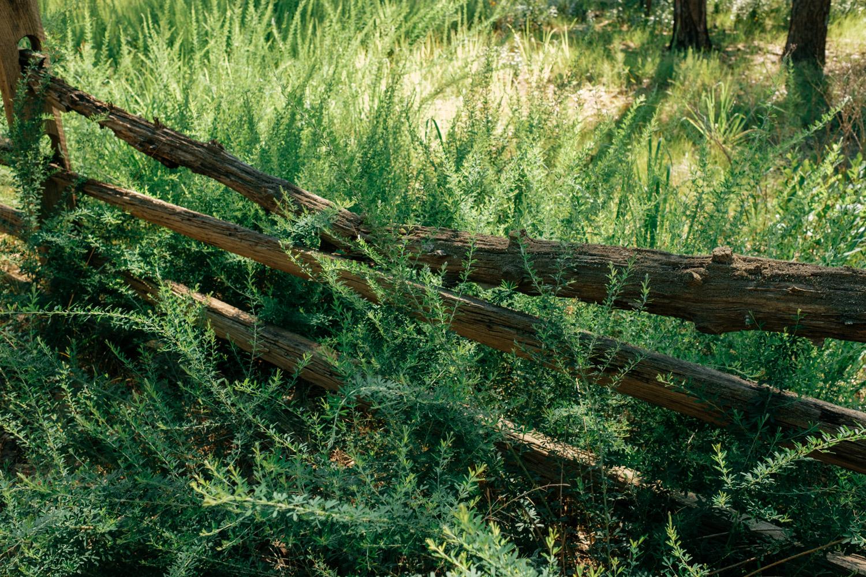 Wharton-State-Forest-Hiking-Mroczek-2821.jpg