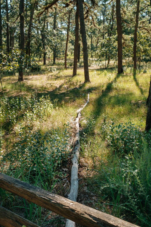 Wharton-State-Forest-Hiking-Mroczek-2826.jpg