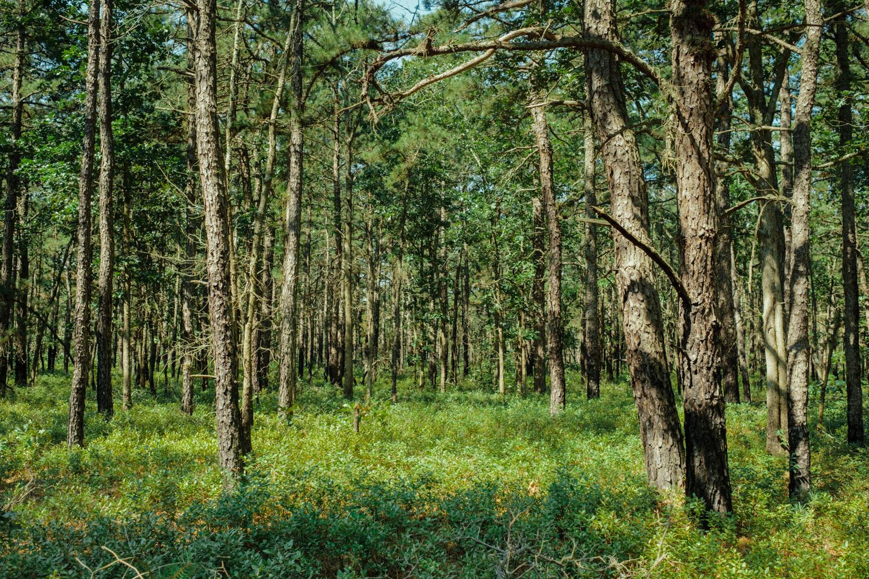 Wharton-State-Forest-Hiking-Mroczek-2848.jpg