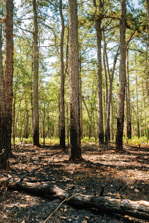Wharton-State-Forest-Hiking-Mroczek-2859.jpg