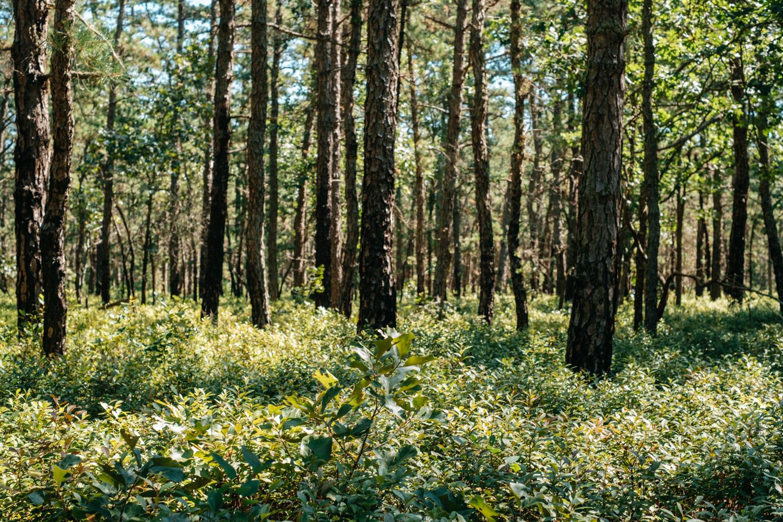 Wharton-State-Forest-Hiking-Mroczek-2866.jpg