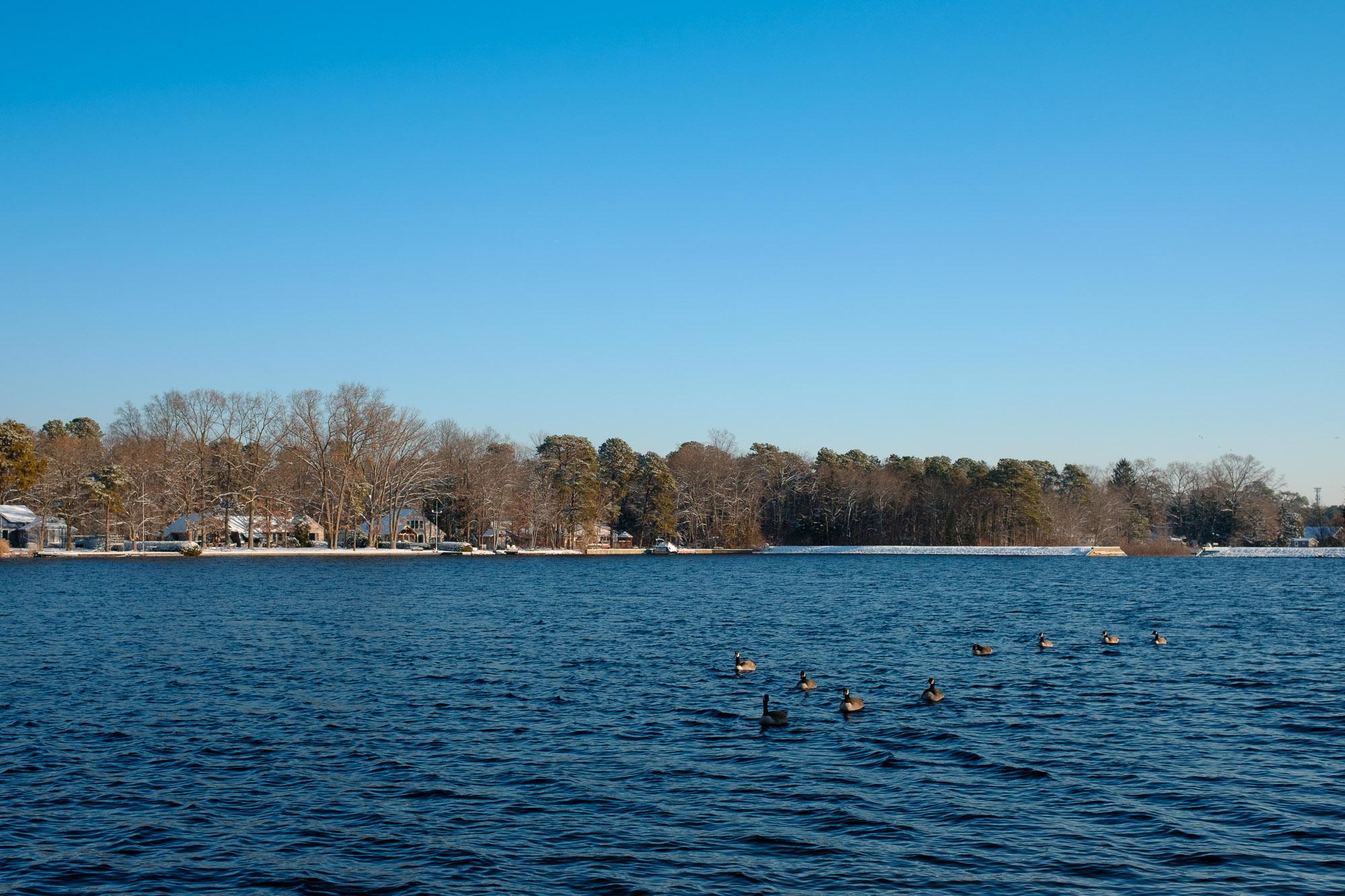 Floating Geese