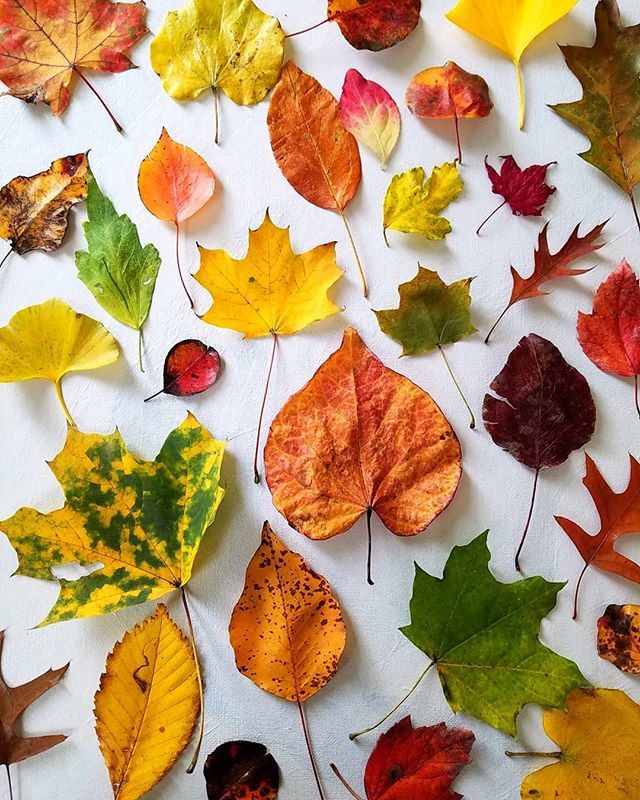 Fall Needs No Filter 🍁🍃🍂