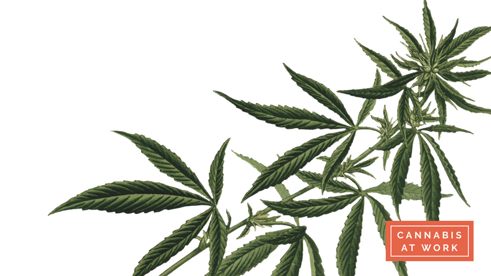 Introduction to Cannabis -