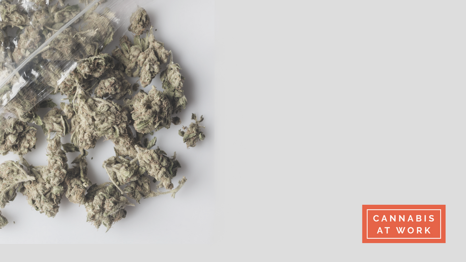 Cannabis industry orientation -