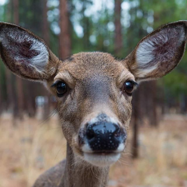 If you're tired of me posting deer pictures, I have bad news for you